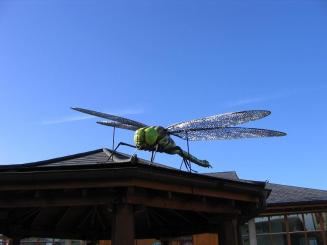 The Wetlands Centre Dragonfly