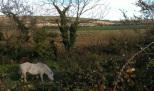 A pony grazes in a field nearby.