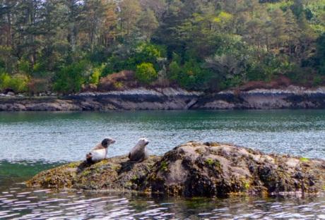 Garinish Seals