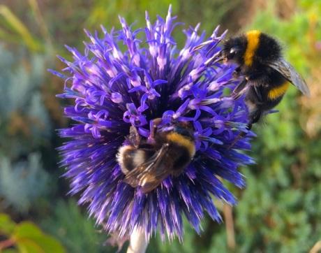 20140814 - Bumblebee3