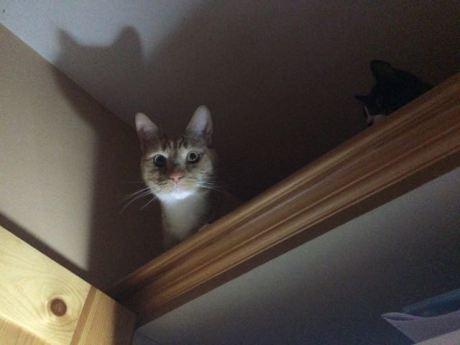 Spooky Cat
