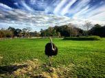 Ostrich, Fota House